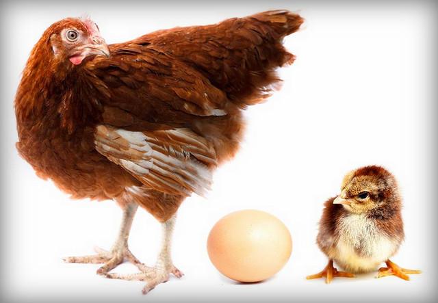 kiedy montaż jeden jajko nie powstaje)