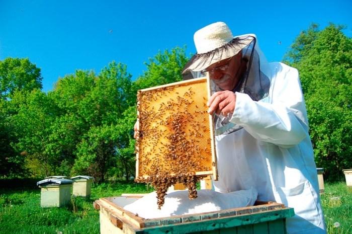 Чем для человека опасен мед