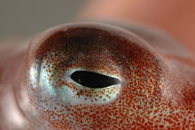 Самые необычные органы чувств в животном мире