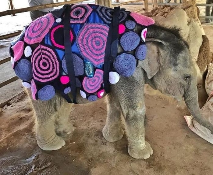 Яркие теплые одеяла согрели замерзающих слонят (фото)