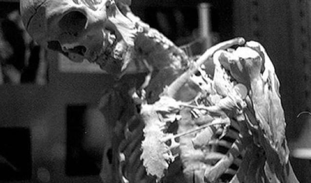 10 страшных и удивительных аномалий, которые преследуют человека