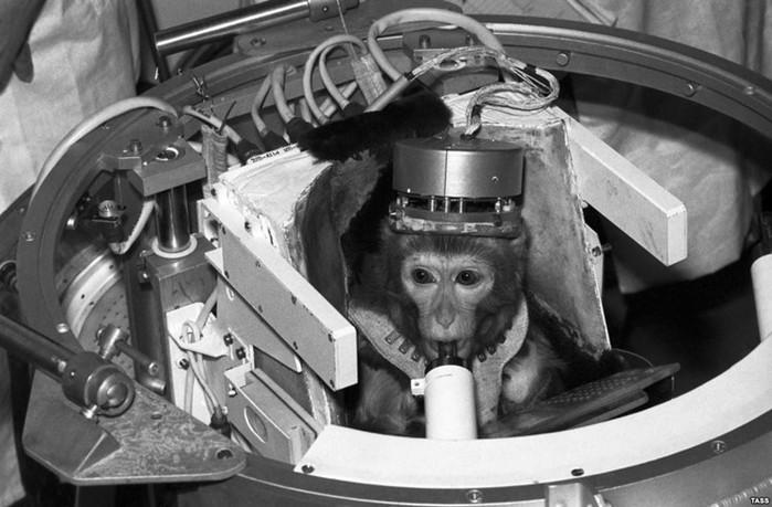 Почему американцы первой в космос запустили обезьяну