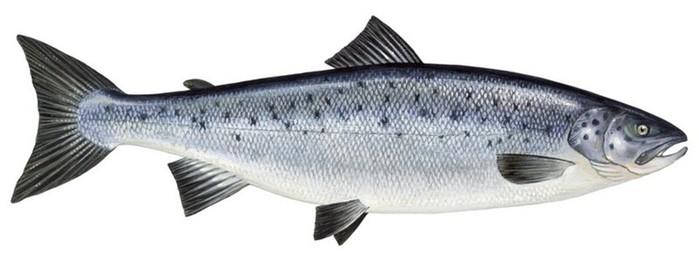 Удивительные факты о рыбах