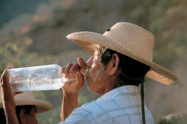 Текила— душа Мексики. Один из самых популярных напитков в мире