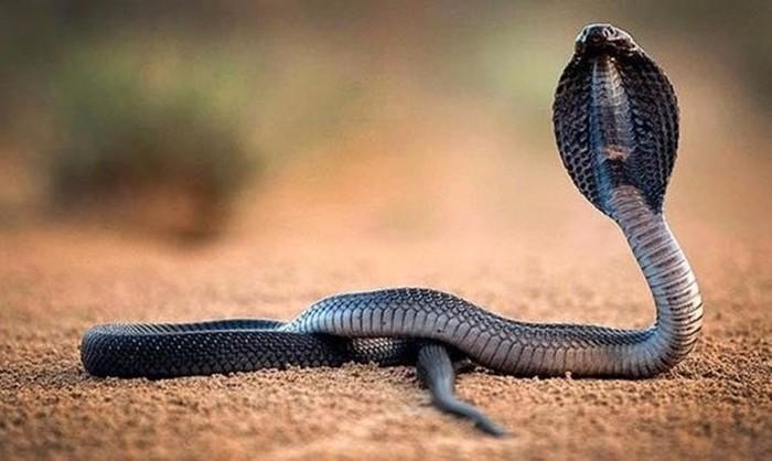 Одни из самых ядовитых существ на планете