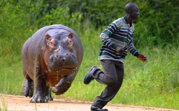 Самые опасные животные на планете