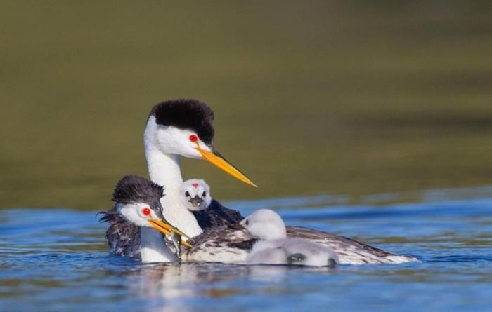 10 странных брачных ритуалов птиц, которые всех удивляют