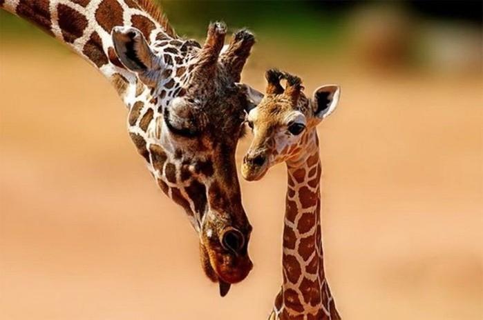Животные, которые заставляют улыбаться: много фотографий