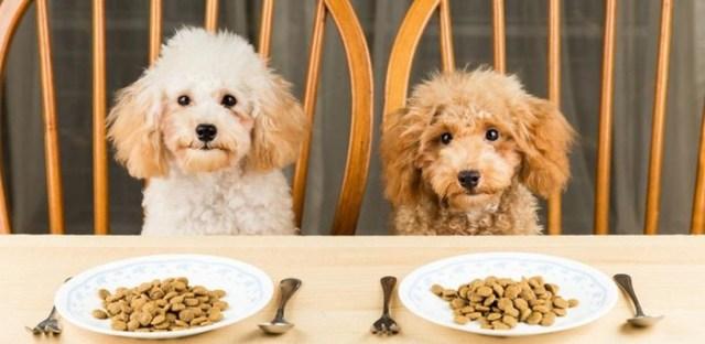 11 интересных фактов о питании кошек и собак