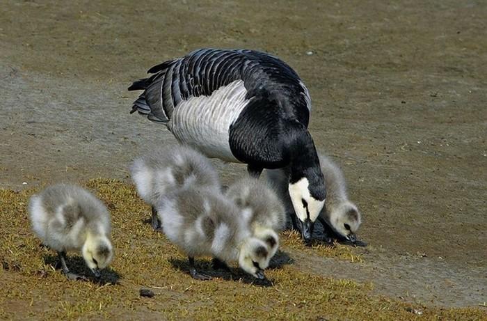 Самые суровые методы воспитания детенышей среди животных