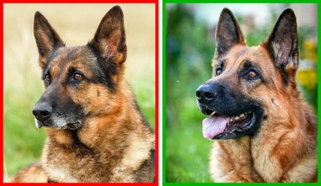 Как понять, что собака может укусить? Основные признаки
