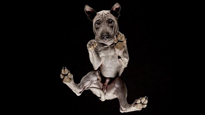 Чудные фотографии животных, сделанные снизу через стекло