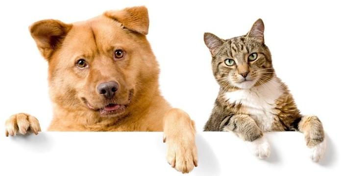 Какую кличку дать животному? Простые правила и советы