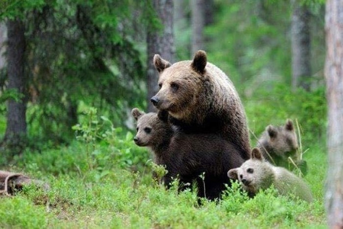 Встречи с дикими животными: истории таежных охотников