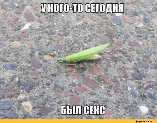 шутеечки от стендап кота про без ума от нее :: картинки с ...