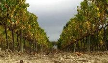 Wine tourism photo