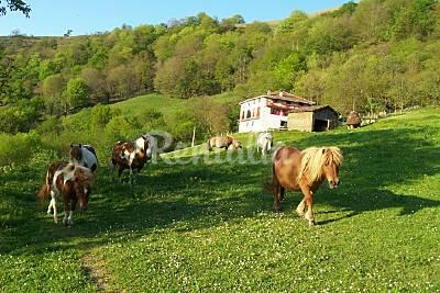 casa rural aislada a 6,5km del pueblo, con ponis Navarra