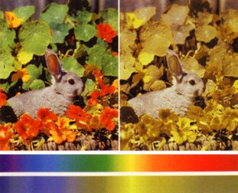 「犬の原色 人間の原色」の画像検索結果
