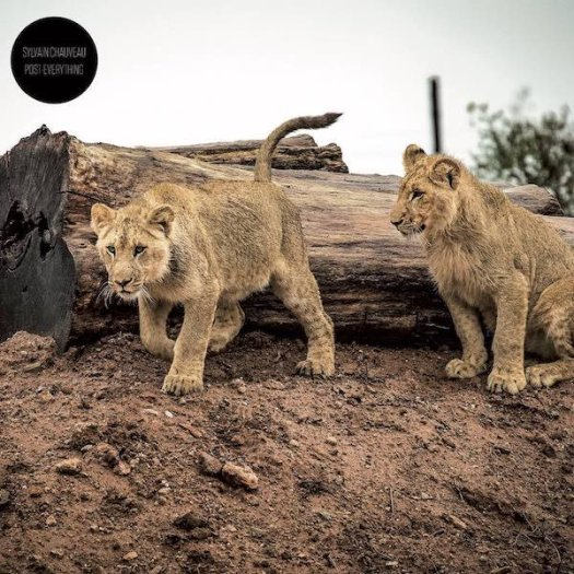 SYLVAIN CHAUVEAU / Post-Everything (CD)