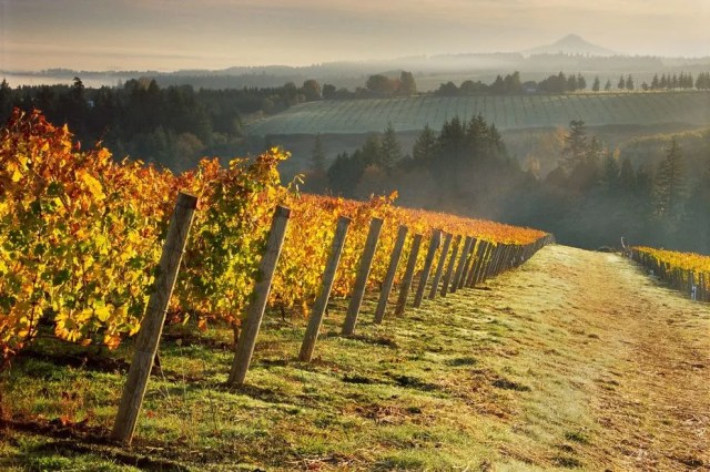 Ponzi Vineyards is not only a leader in sustainability but also helped put Oregon wines on the international map.