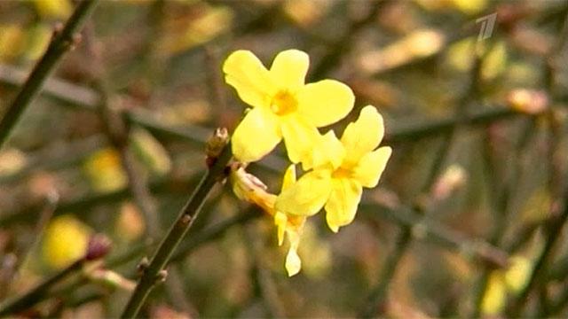 Погодная аномалия - в Крыму цветут сады