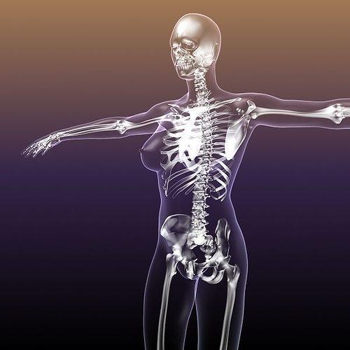 Female Skeleton in Woman Body Anatomy 3D model   CGTrader