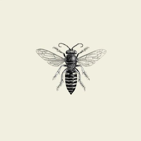 Photo Illustration of Bee