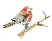 Blushing Puff - watercolor painting, bird print, red, nursey art, 8x10 art print - LightheartedDreamer