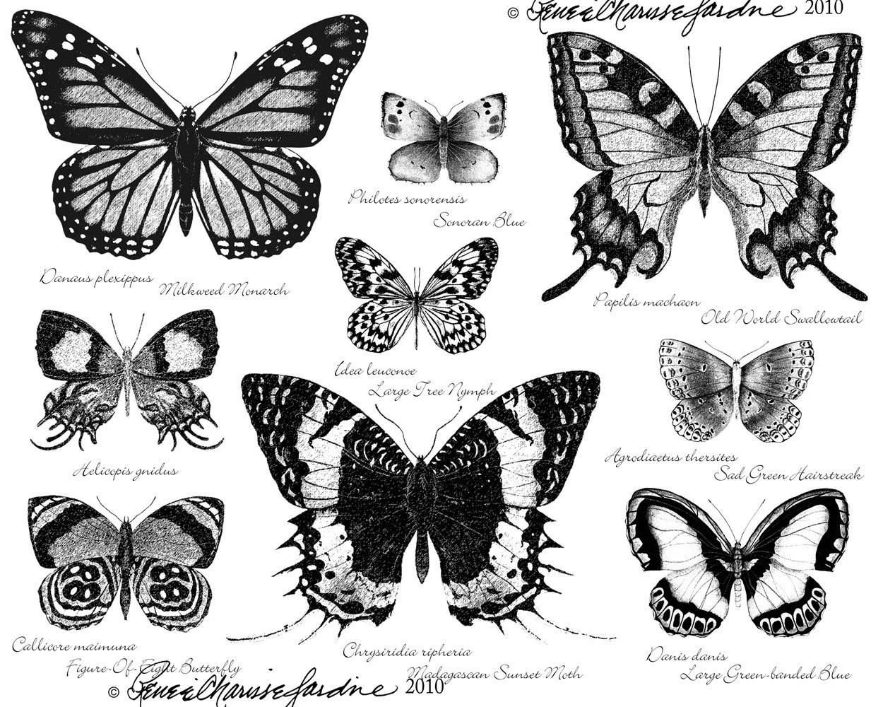 Butterfly Scientific Diagram
