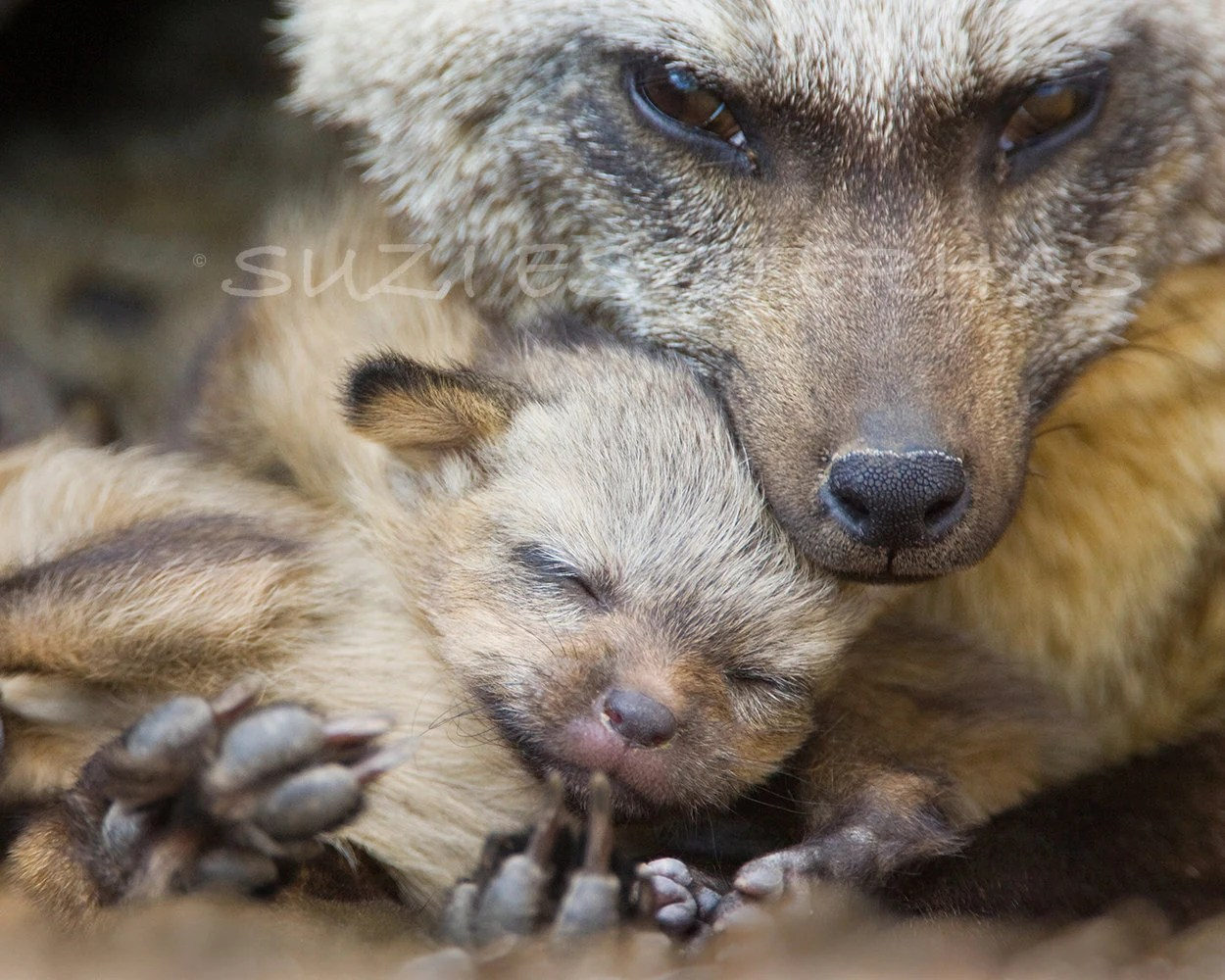 Mom And Baby Animal Photography Nursery Art By