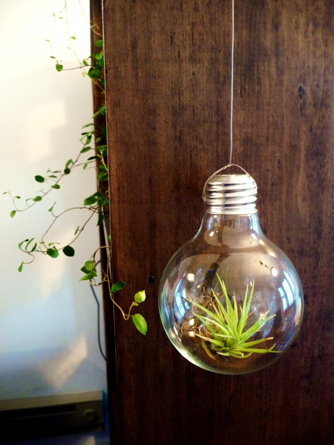 Light Bulb Air Plant By Pageandscott On Etsy