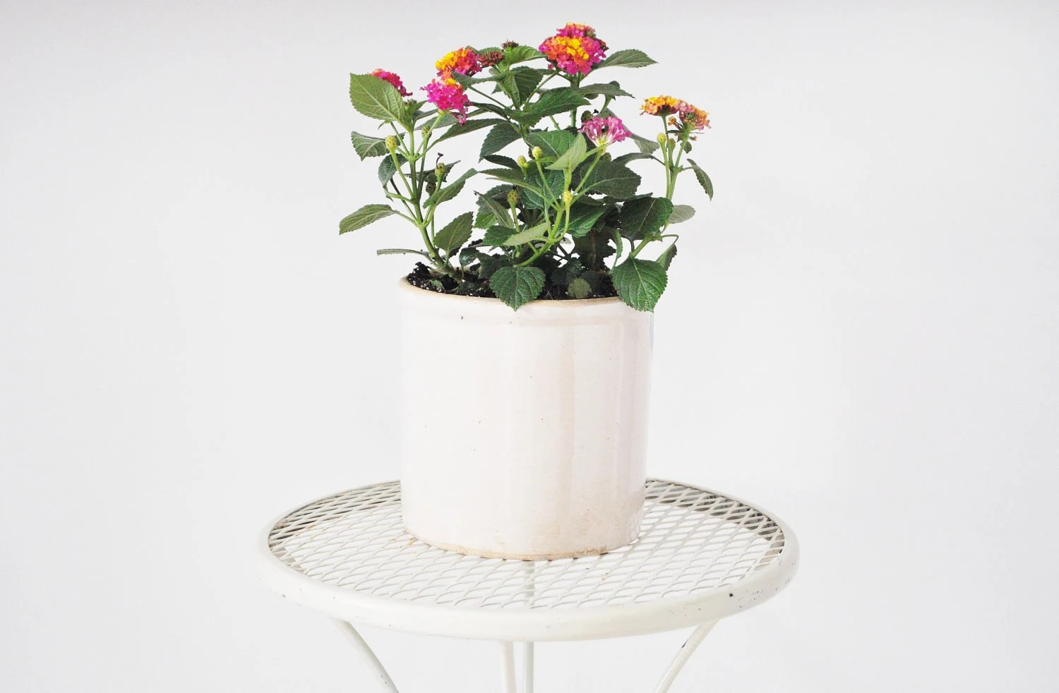 Mid-Century Plant Stand - Off White - thewhitepepper