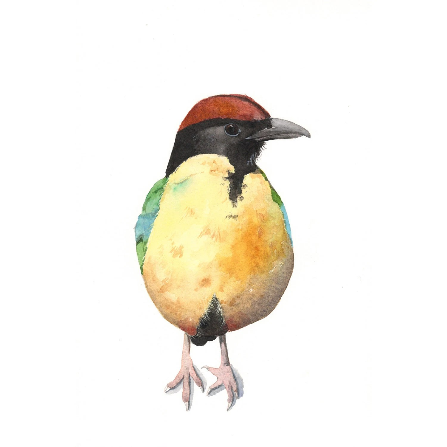 Bird Watercolor Painting - Noisy Pitta yellow nature wildlife art - N055- Print of Watercolor Painting - 5 by 7 print - Splodgepodge