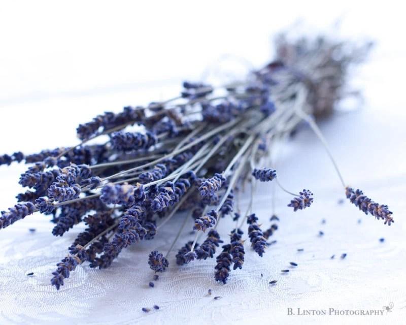 Flower Photography - Lavender Photograph - 8x10 Fine Art Photography Print - Lavender White Purple Home Decor - BLintonPhotography