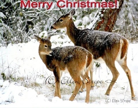 Christmas Card Cards Deer Wildlife Merry Christmas Ellen