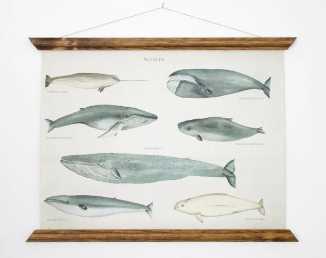 Pretty Things - Whale Poster from ARMINHO