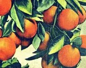 botanical art photo ORANGES 16x20 large art print tropical deco vintage kitchen decor 1930s green orange Florida citrus house wall art - VintageBeach