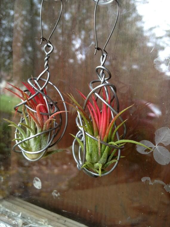 NEW DESIGN Pair Of Living Air Plant Earrings