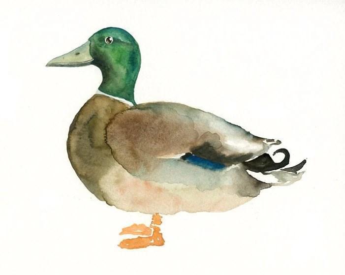 Duck Colors Mallard Painting