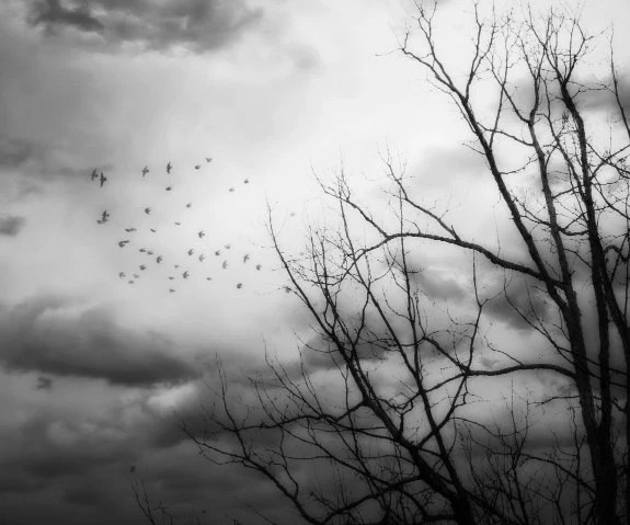Departure- Fine Art Black and White Photograph, Winter Trees, Birds, Dark, Misty, Stormy - SevenTen