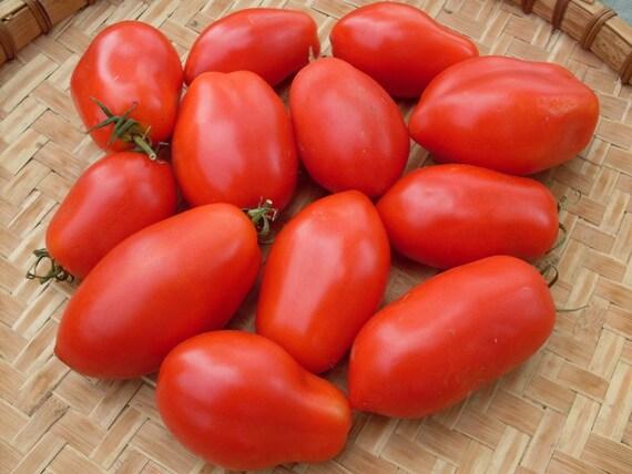 Risultati immagini per pomodori roma
