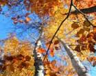 Nature Photography-Autumn Sky Fine Art Print