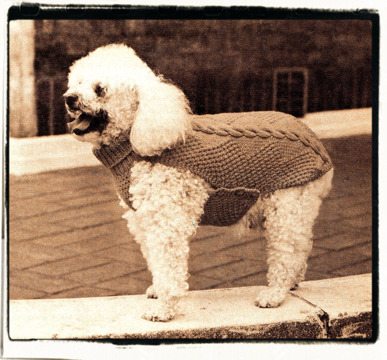 Knitting Pattern For Medium Sized Dog : Instant Download PDF Seventies KNITTING PATTERN to make an Aran Style Snug Wi...