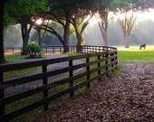 Horse Farm Fence, Ocala F...