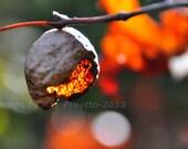 The Nut, Autumn Colors, F...
