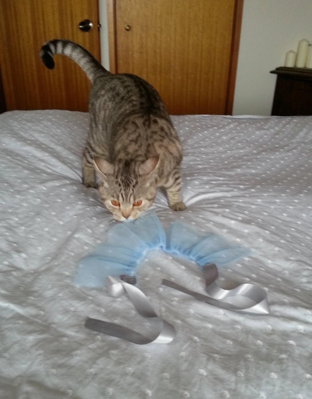 Blue cat tutu, cute cat clothes, animal costume - GrannyJack
