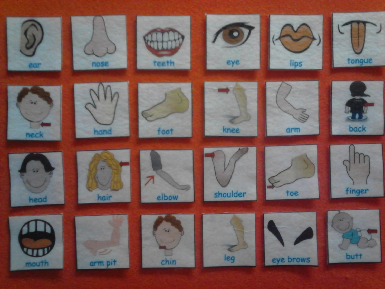 Human Body Parts Flash Cards Human Body Body By Kidslearningtools