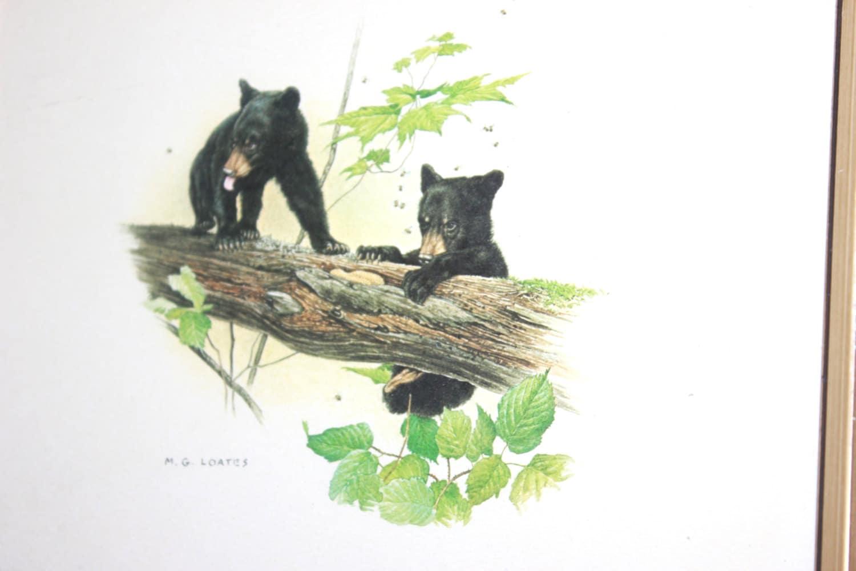 Black Bear Cubs Print Bear Print Animal Artwork