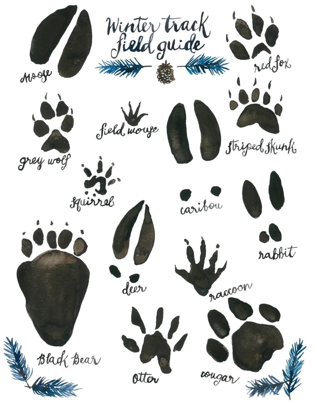Woodland Nursery Animal Track Field Guide Watercolor Wildlife