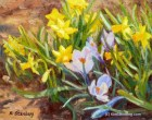 "Crocus Daffodil Painting, Original Oil Painting, 8 x 10"", ""Crocuses and Miniature Daffodils"" by Kim Stenberg, Rich Impressionistic Art"